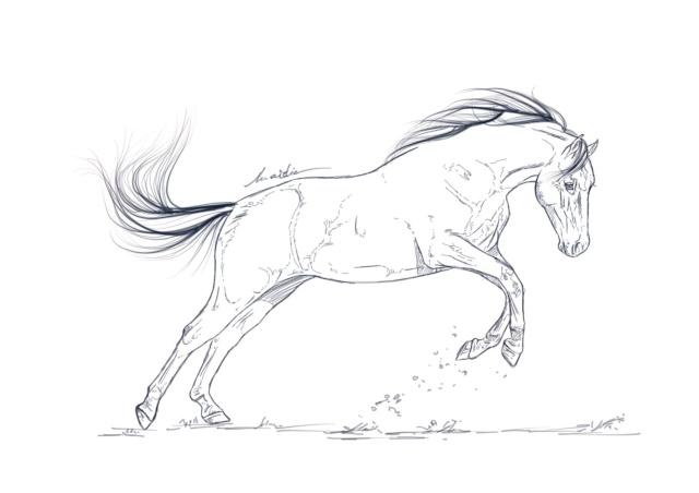 colo d'un poney de sport Poney_10