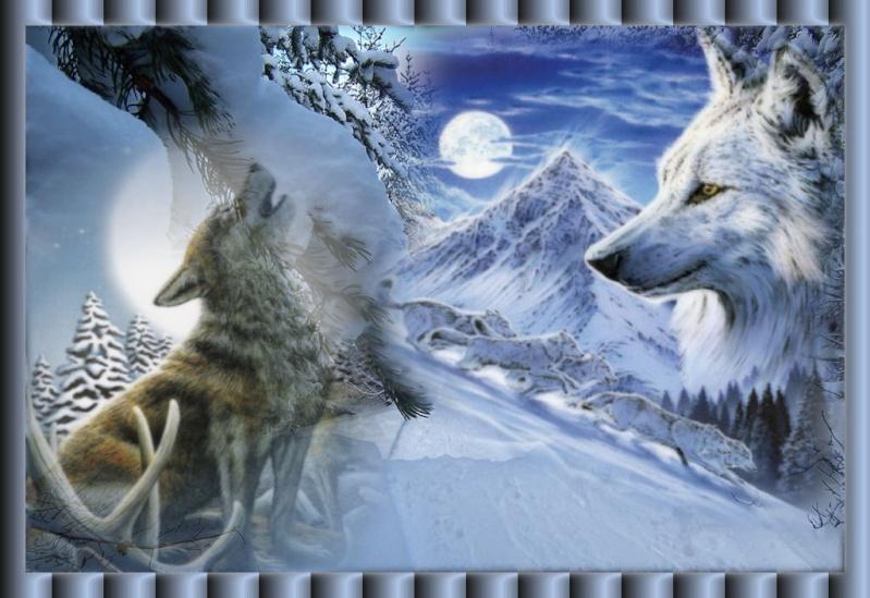 Rsultat de recherche dimages pour loup frique