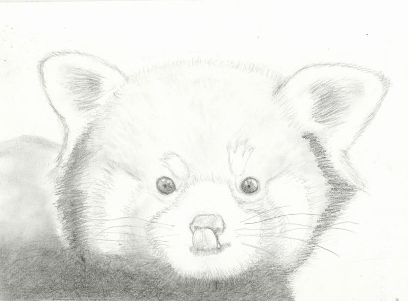 Dessin de panda roux - Coloriage petit panda ...