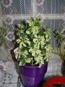 Mes plantes P3160010