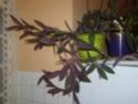 Mes plantes P3160011
