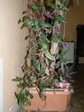 Mes plantes P3160012
