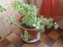 Mes plantes Pb040011