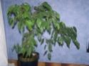 Mes plantes Pb060010