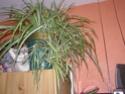 Mes plantes Pb060012
