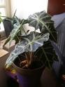 Mes plantes Pb070011