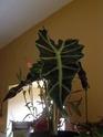 Mes plantes Pb070012
