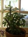 Mes plantes Pb070013