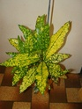 Mes plantes Pb070014