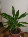Mes plantes Pb070016