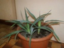 Mes plantes Pb070017