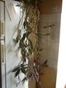 Mes plantes Pb070019