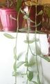 Mes plantes Pb070020