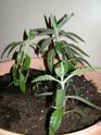 Mes plantes Pb070021