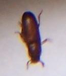 Demande d'identification insecte (avec photos) 10_bmp10