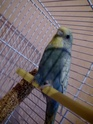 voila mes bebes:)) Sany0010