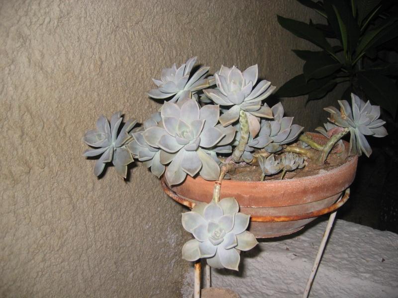 Qualcuno conosce questa pianta? Img_0010