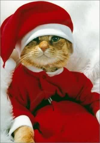 Vos photos des plus beaux Père Noël Chat-n10