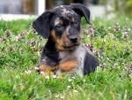 Votre race de chien préférée? Untitl13