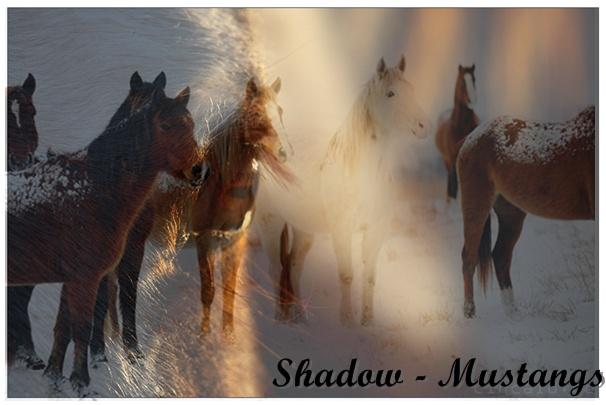 Shadow - Mustangs Tumblr10