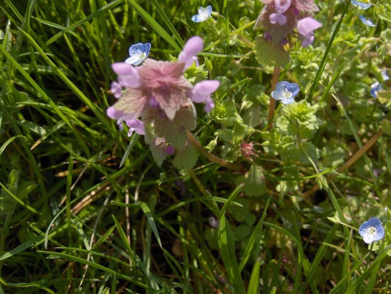 un pissenlit imménse Fleurs14