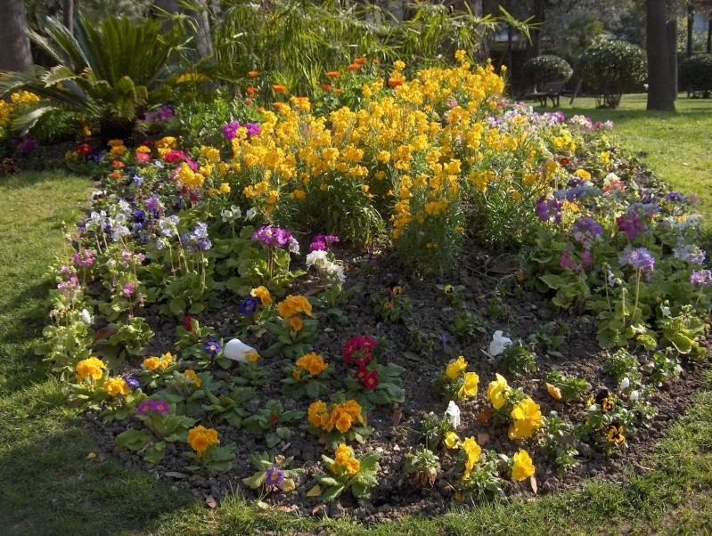 les plantes qui poussent dans ma région Hpim1911