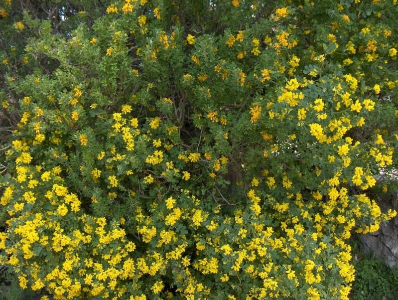 les plantes qui poussent dans ma région Hpim1913