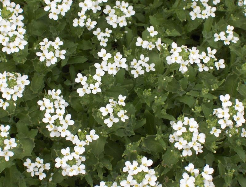 Les fleurs de mon jardin Hpim2012
