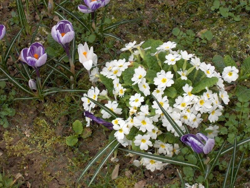 Les fleurs de mon jardin Hpim2014