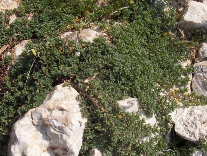 les plantes qui poussent dans ma région Hpim2019
