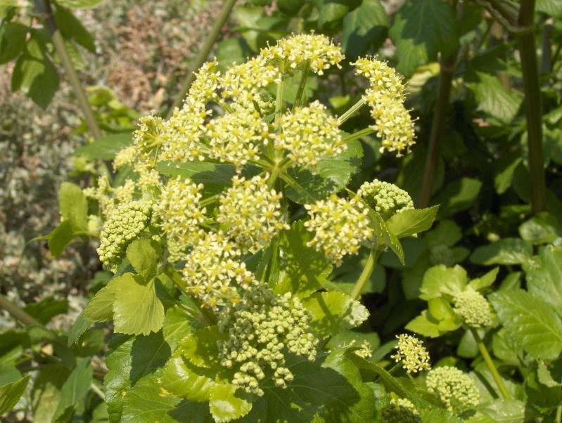 les plantes qui poussent dans ma région Hpim2021