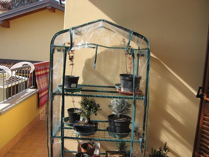 Dove coltiviamo i nostri bonsai - Pagina 2 Img_3310