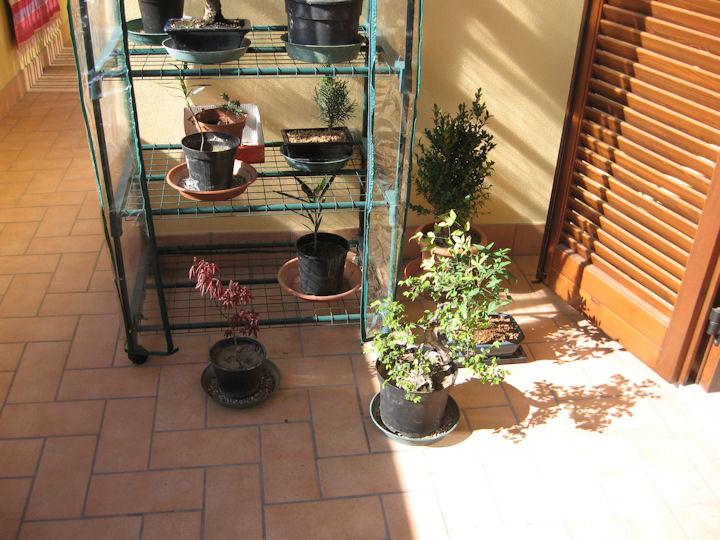Dove coltiviamo i nostri bonsai - Pagina 2 Img_3311