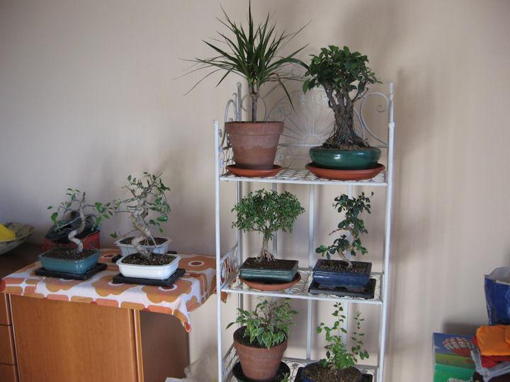 Dove coltiviamo i nostri bonsai - Pagina 2 Img_3312