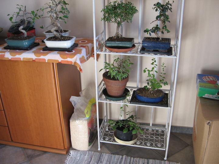 Dove coltiviamo i nostri bonsai - Pagina 2 Img_3313