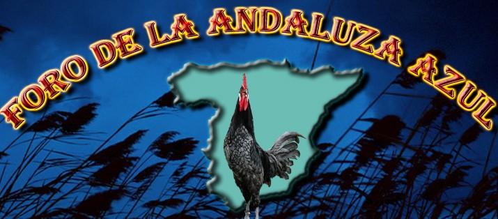 Asociación Española de Criadores de la Gallina de raza Andaluza Azul