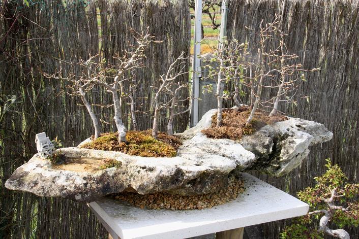 Forêt de charmes sur roche Img_1410