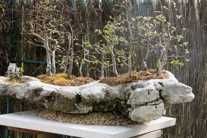 Forêt de charmes sur roche Img_1411