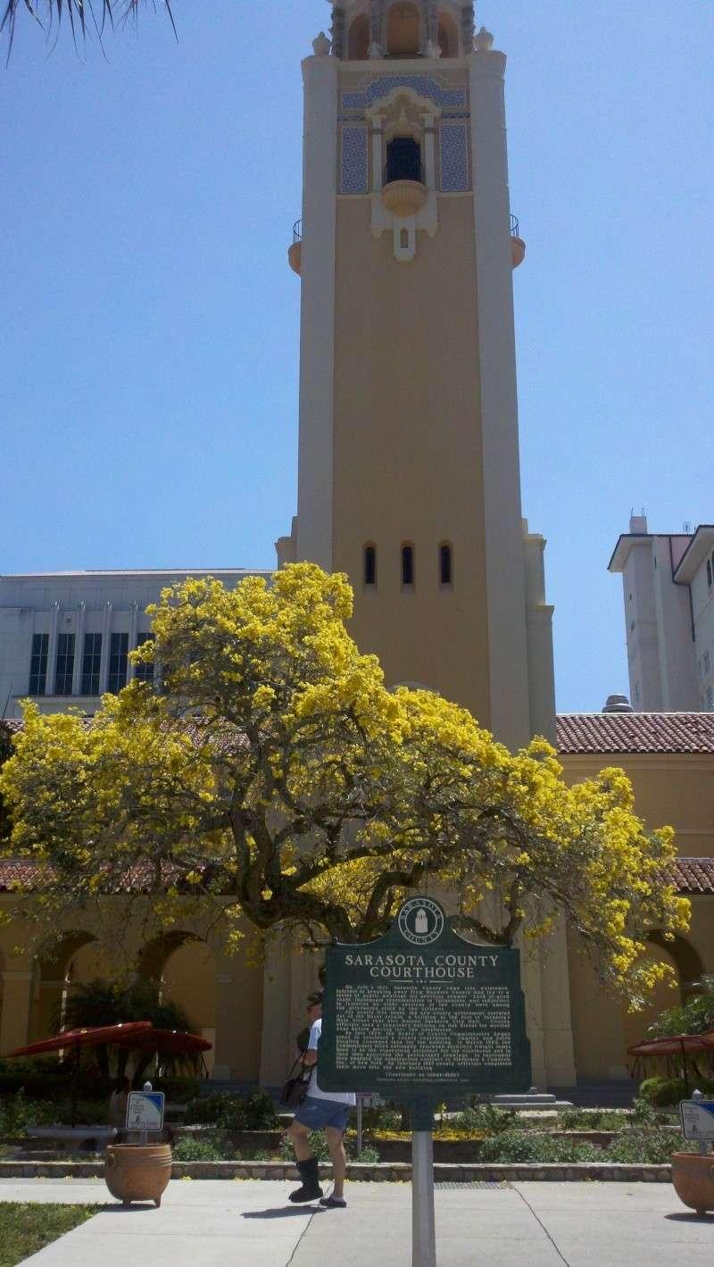 Beautiful Sarasota Banyan. 2011-015