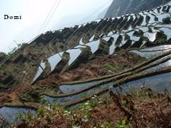 La Chine sac au dos (11) : Yunnan, de Kunming au Xishuangbanna par Jianshui (建水) et les rizières de Yuan Yang (元阳) 8_yuan10