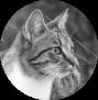 Katzen des vergessenen Tals - Portal Abendl10