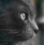 Katzen des vergessenen Tals - Portal Bloomy11