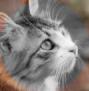 Katzen des vergessenen Tals - Portal Knospi10