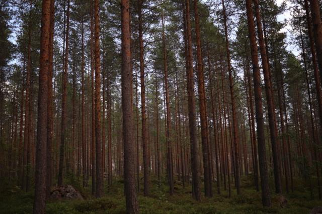 Retour de Finlande Img_9312