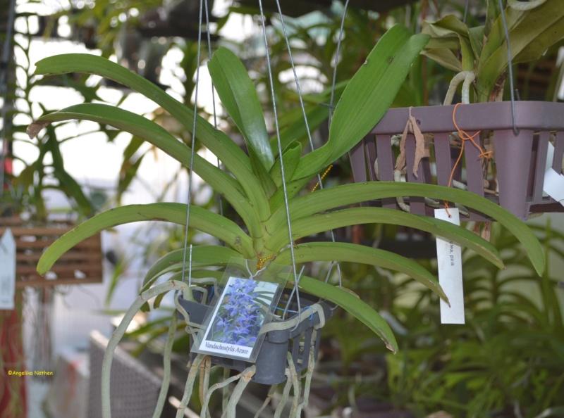 Orchideen-Neuzugang 2 - Seite 29 08_04_11
