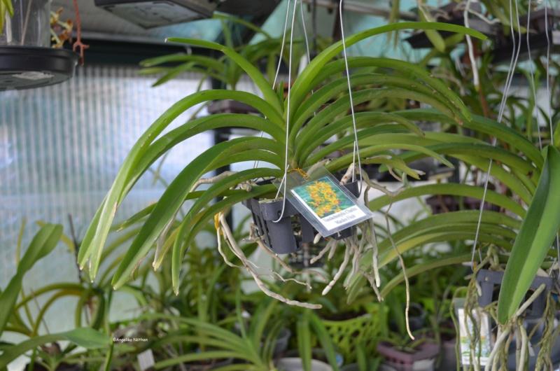 Orchideen-Neuzugang 2 - Seite 29 08_04_12