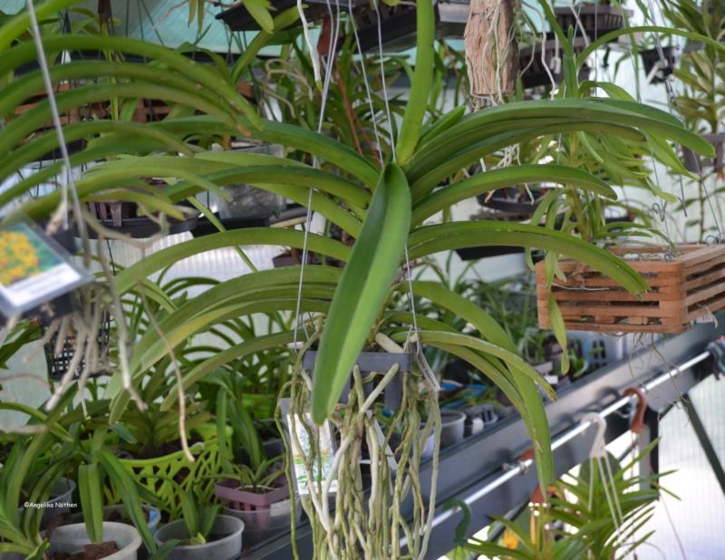 Orchideen-Neuzugang 2 - Seite 29 08_04_13