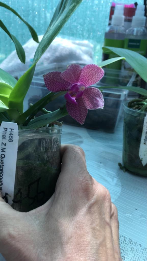 Orchideen-Neuzugang 2 - Seite 4 C7e6e310