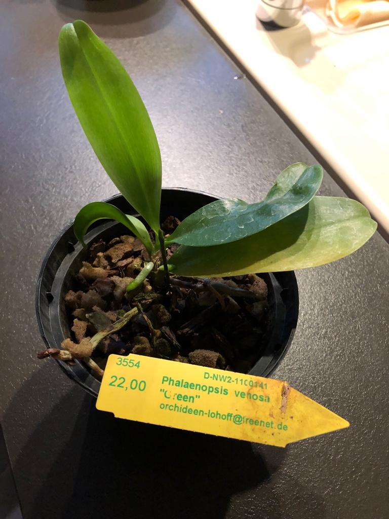Orchideen-Neuzugang 2 - Seite 14 Phal_v10