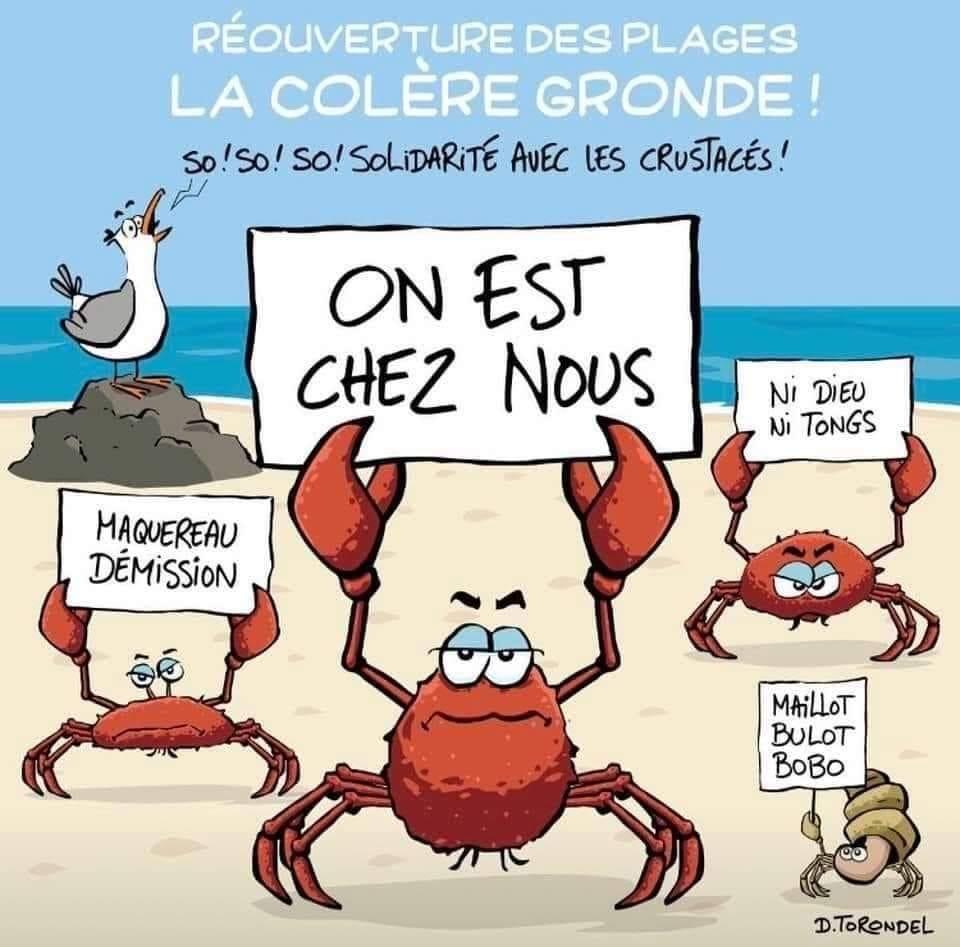 humour - Humour Anti-coronarien - Page 6 Covid_11
